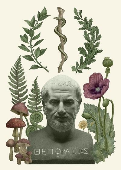 Los herbarios: una historia
