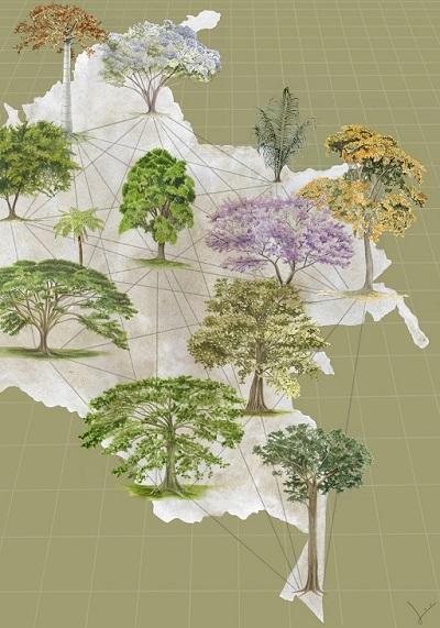 Qué hace y para qué sirve un herbario