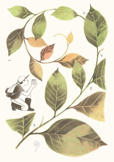 Asociación colombiana de herbarios